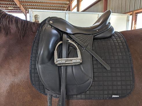 Saddle R.jpg