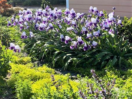 March 2021 Gardening Tips