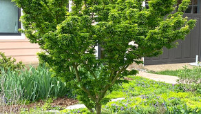 May 2021 Gardening Tips