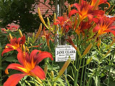 2018-JaneClark-Garden.JPG