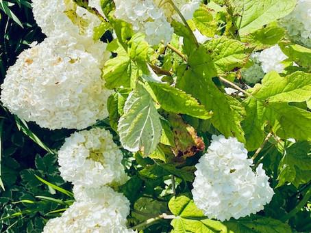 June 2021 Gardening Tips