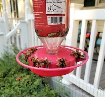 2019-Tricia's Bee Feeder-1-edit.jpg