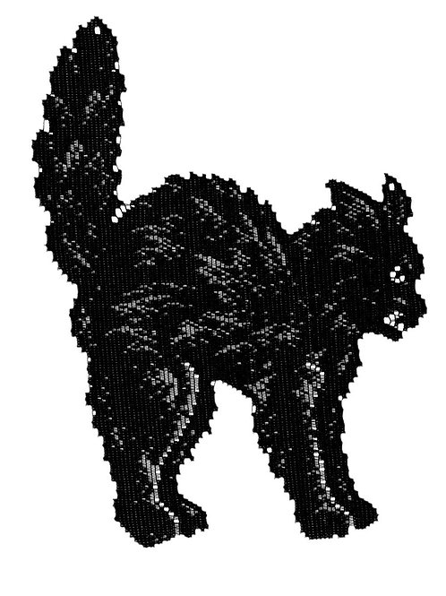Lace Black Cat