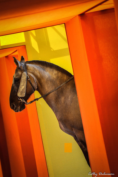 Photographie animalière - Saut Hermès