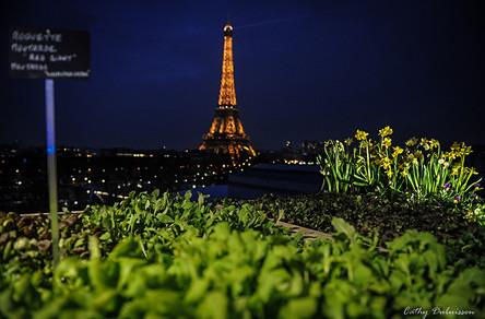 Photographie Paysage - Paris