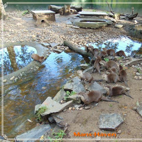 Curraghs Wildlife Park