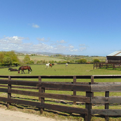 Home of Rest For Old Horses