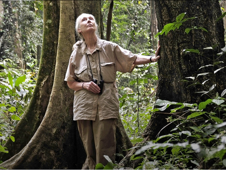 """INTERVIEW: Jane Goodall: """"Ich arbeite nonstop"""""""
