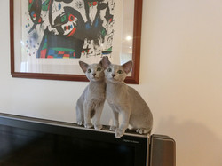 mimosa's kittens