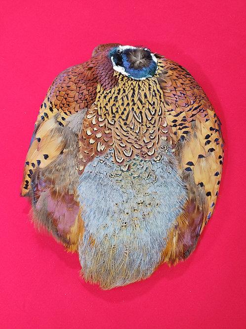 Ringneck Pheasant Pelts
