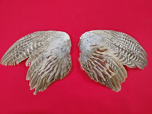 Ringneck Pheasant WIngs