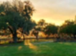 Sunset over Ever Horse Farm Ocala