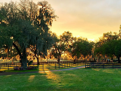 Sunset over Ever Horse Farm Ocala