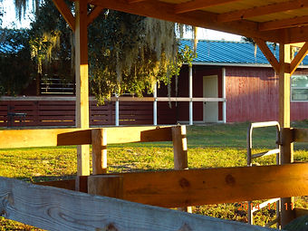 Ever Horse Farm | Horse Boarding Ocala