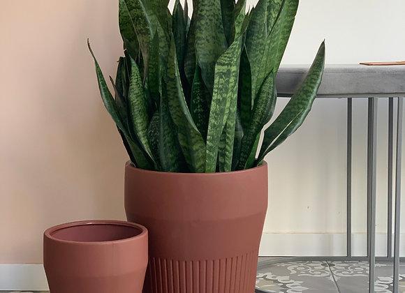 Thea flowerpot