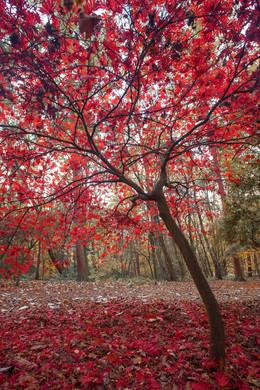 Golden Acre Nature Autumn 2018-7.jpg