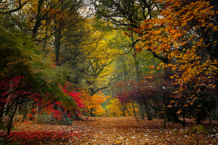 Golden Acre Nature Autumn 2018-9.jpg