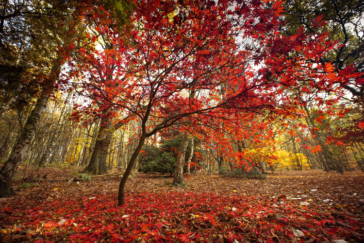 Golden Acre Nature Autumn 2018-8.jpg