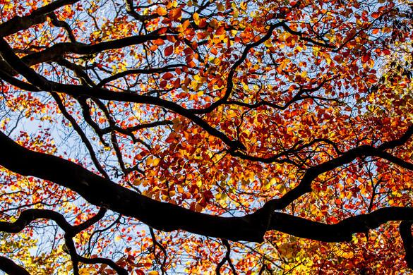 Autumn October 2018-8.jpg