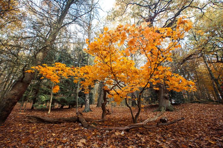 Golden Acre Nature Autumn 2018-6.jpg