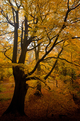 Golden Acre Nature Autumn 2018-12.jpg