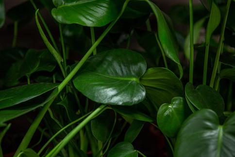 Wild-Leaf-03.jpg