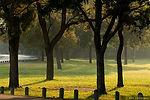 JR98380-treescape.jpg