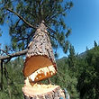 sonora tuolumne arnold calaveras tree removal bark beetle prevention