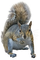 squirral.jpg