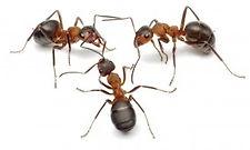 ants_white.jpg