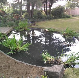 Alun Gedrych Ltd - Completed Man Made Garden Pond