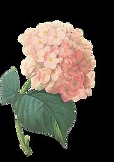 Flores de color rosa Ilustración 2