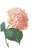 ピンクの花のイラスト2
