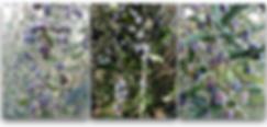 スクリーンショット 2020-04-08 19.42.35.png