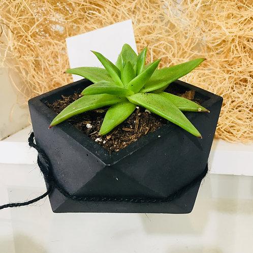 Geometric Concrete Pot with Succulent