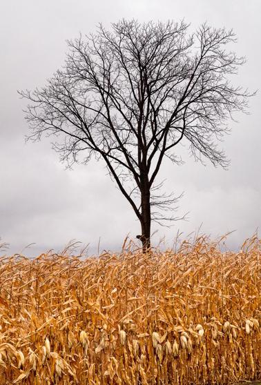 tree in field.jpg