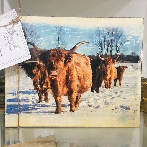Highland Cattle Photo Transfer on Barnwood