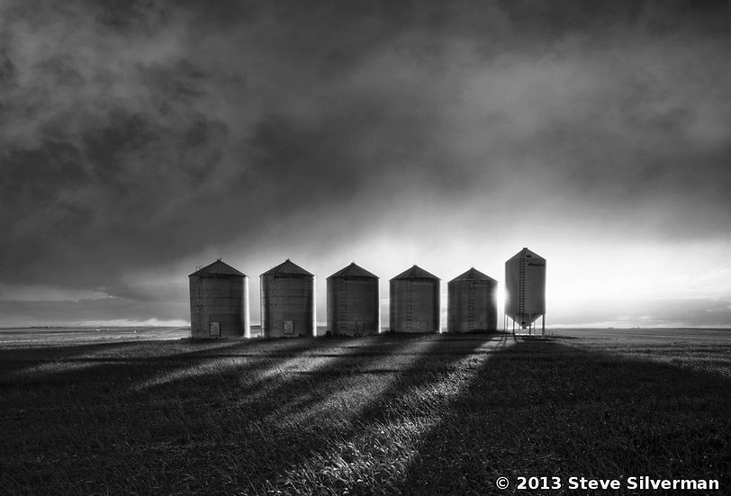 Steve Silverman- The Tin Men