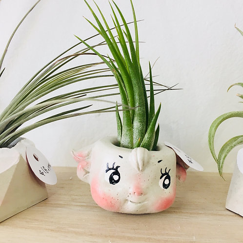 Space Queen Handmade Concrete Planter with Air Plant