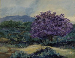 Ironwood Tree in Bloom