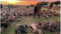 """Caso do """"massacre"""" de 540 animais ainda não tem arguidos"""