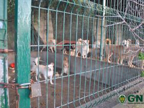 GNR resgata 109 animais em Arruda