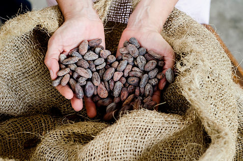 cacao bag  hands.jpg