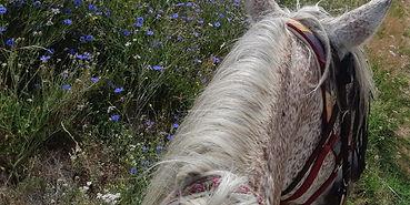 horse 2 - resized.jpg