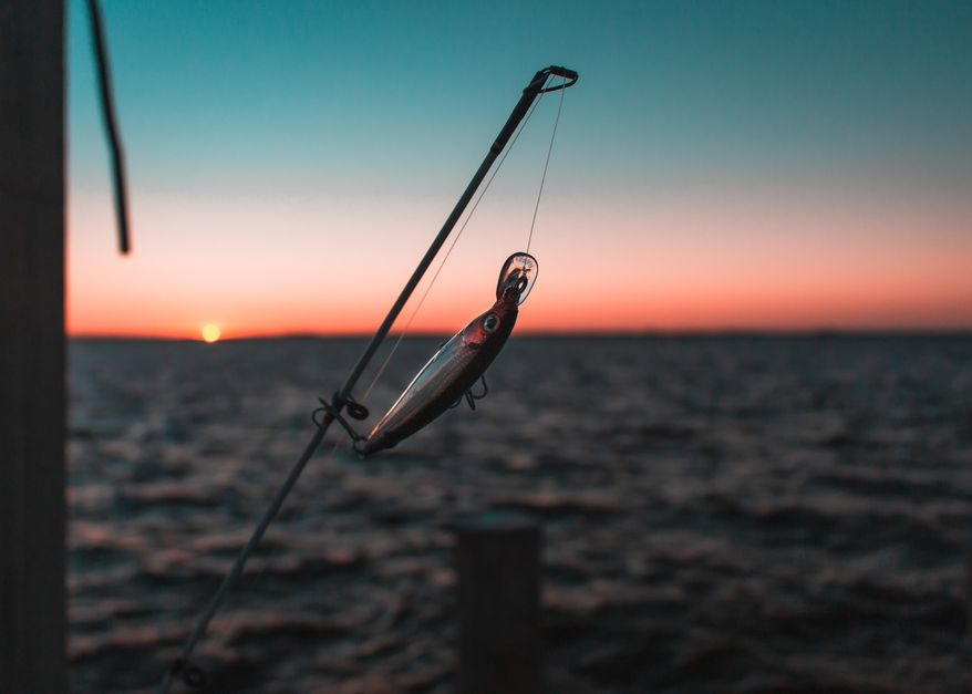 德州撲克 魚