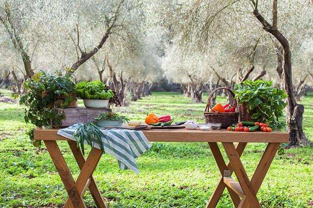 בצל עצי הזית