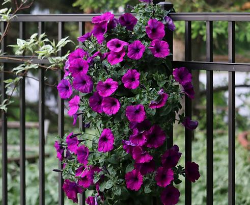 Petunias Als Flower Pouch.png