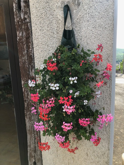 Ivy Geranium pouches spotted in Paris