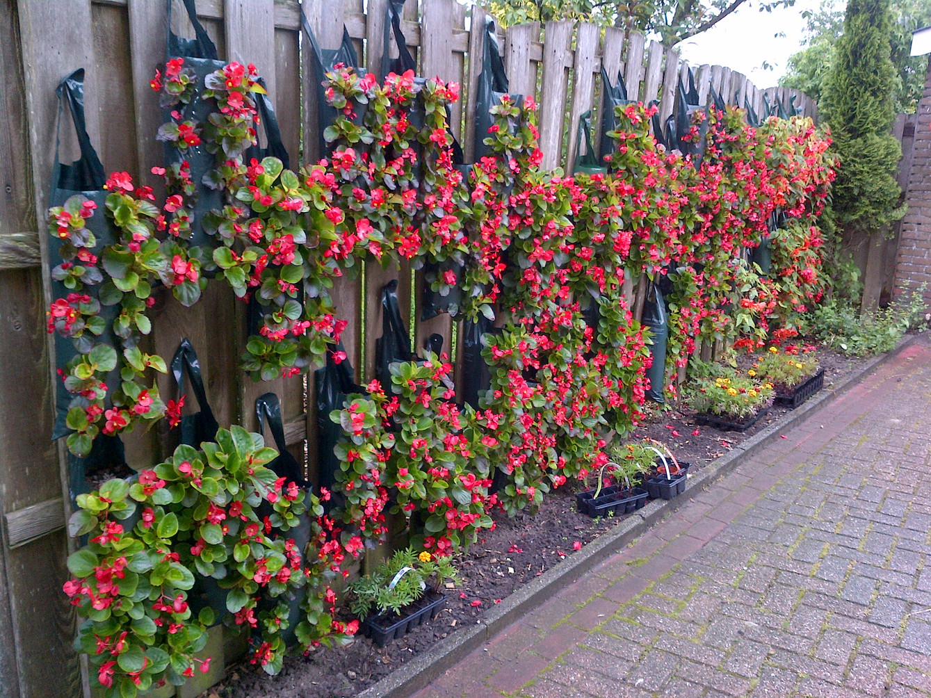 Building a living wall in the Netherlands