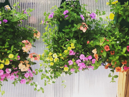 Mixed annuals, Wayne's Daughters Farm & Greenhouse